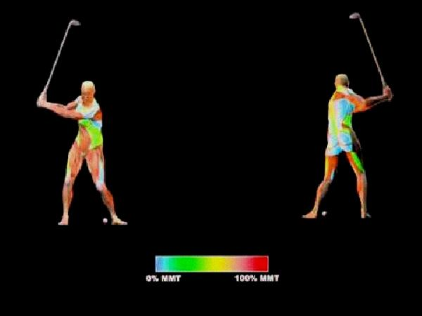 muscles used in golf swing